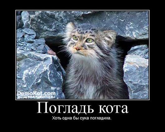 demotivatory_pro_kotje_002.jpg