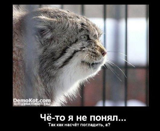 demotivatory_pro_kotje_006.jpg