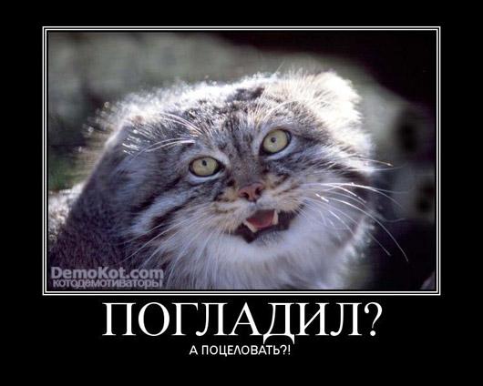 demotivatory_pro_kotje_010.jpg