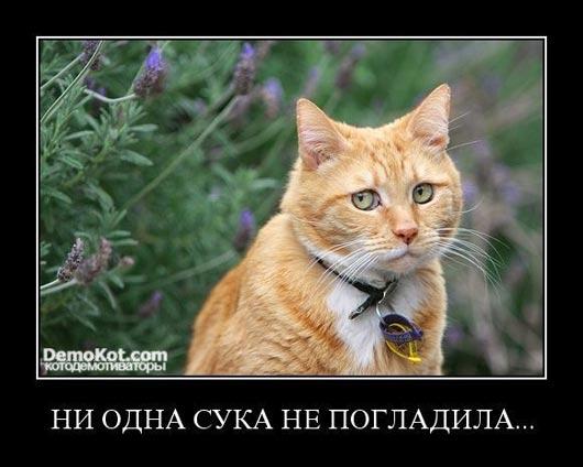 demotivatory_pro_kotje_013.jpg
