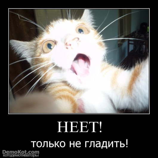 demotivatory_pro_kotje_015.jpg