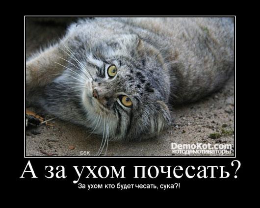 demotivatory_pro_kotje_017.jpg
