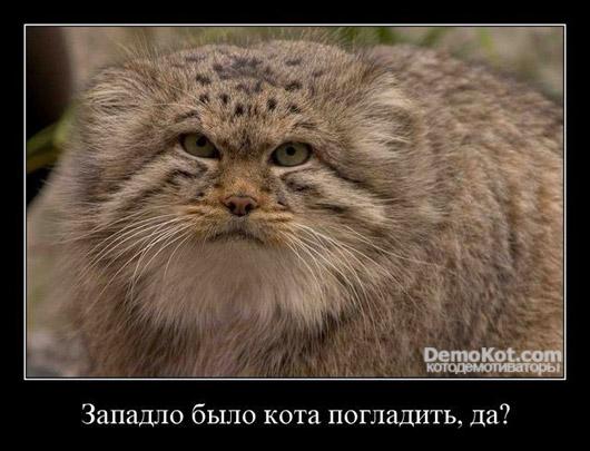 demotivatory_pro_kotje_020.jpg
