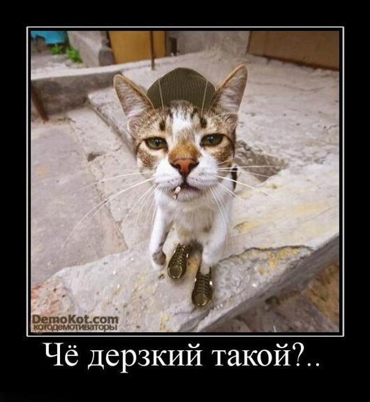 demotivatory_pro_kotje_027.jpg