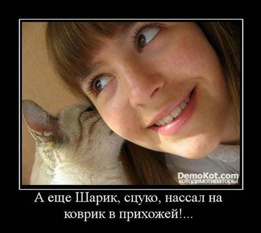 demotivatory_pro_kotje_031.jpg