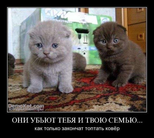 demotivatory_pro_kotje_037.jpg
