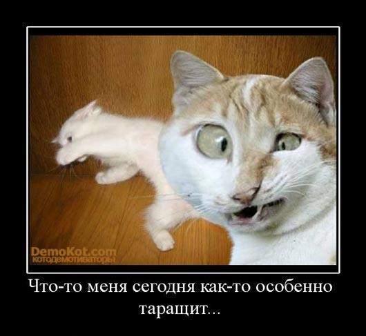 demotivatory_pro_kotje_038.jpg