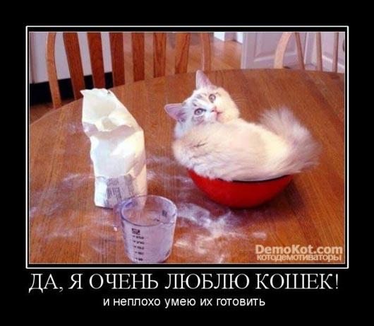 demotivatory_pro_kotje_039.jpg
