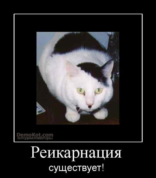 demotivatory_pro_kotje_045.jpg