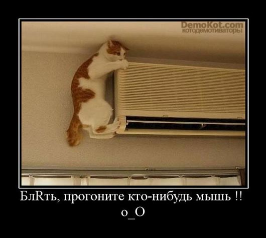 demotivatory_pro_kotje_049.jpg