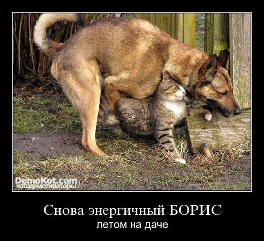 demotivatory_pro_kotje_050.jpg