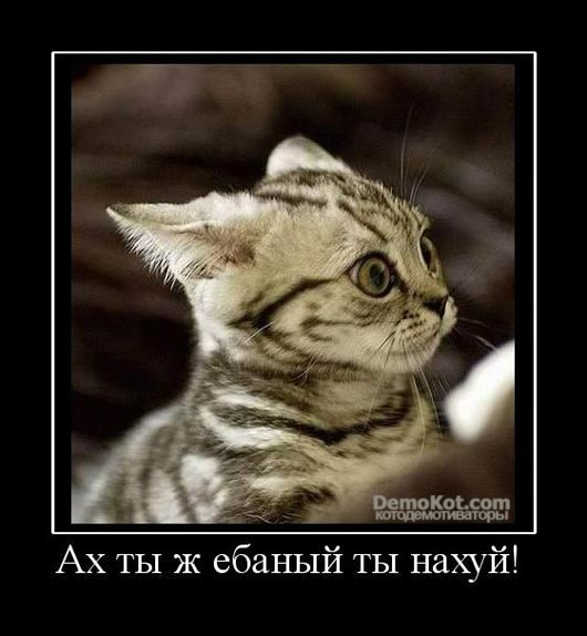 demotivatory_pro_kotje_053.jpg
