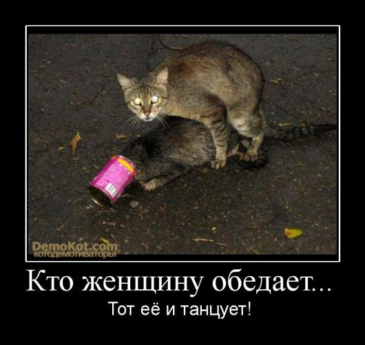 demotivatory_pro_kotje_054.jpg