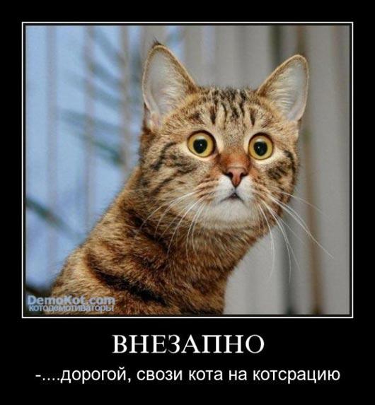 demotivatory_pro_kotje_062.jpg