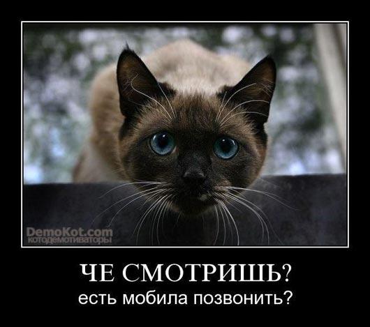demotivatory_pro_kotje_063.jpg