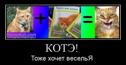 demotivatory_pro_kotje_064.jpg