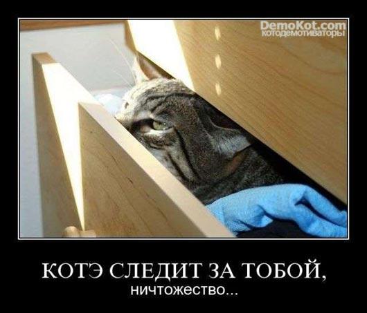 demotivatory_pro_kotje_065.jpg