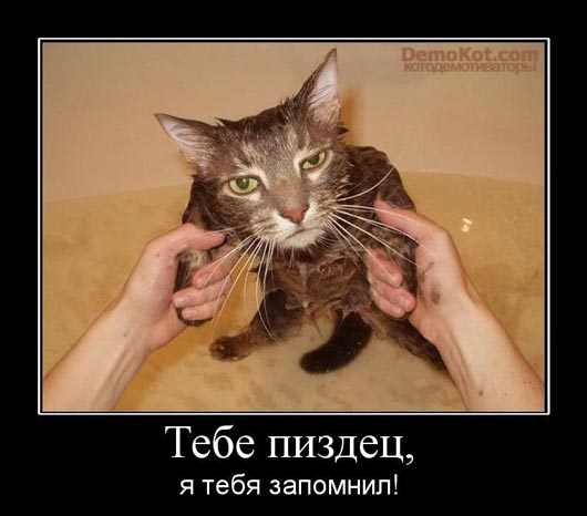 demotivatory_pro_kotje_067.jpg