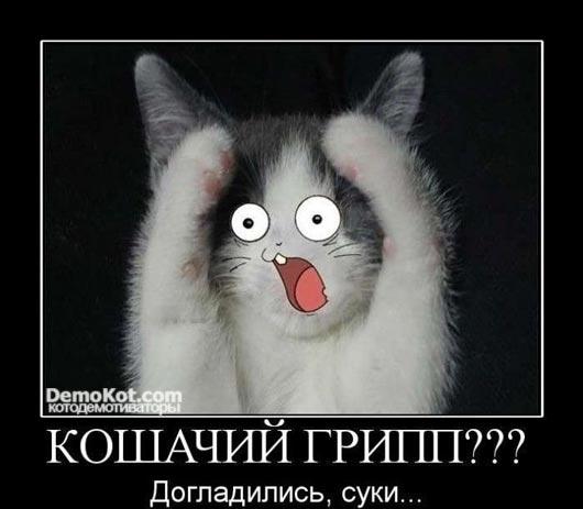 demotivatory_pro_kotje_071.jpg