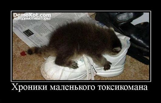 demotivatory_pro_kotje_072.jpg