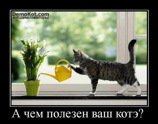 demotivatory_pro_kotje_074.jpg