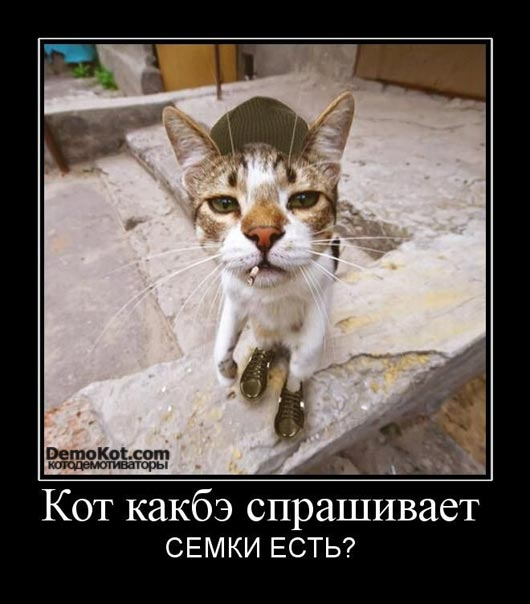 demotivatory_pro_kotje_080.jpg