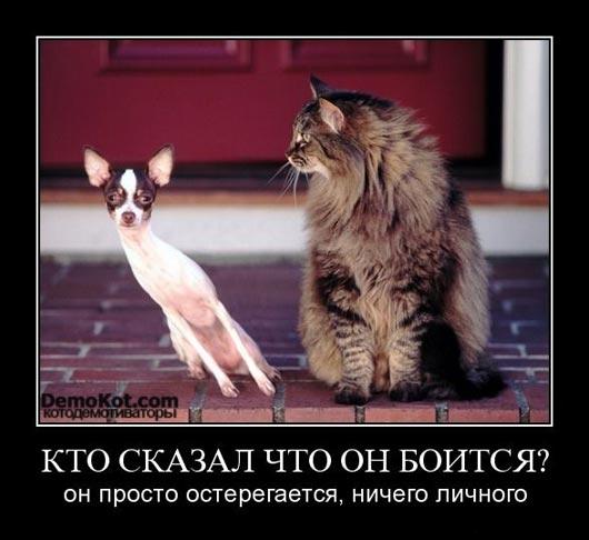 demotivatory_pro_kotje_082.jpg