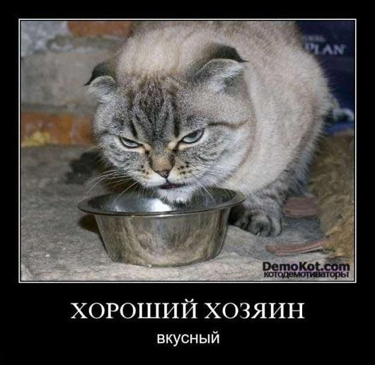 demotivatory_pro_kotje_083.jpg
