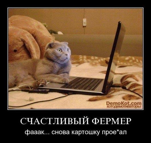 demotivatory_pro_kotje_086.jpg
