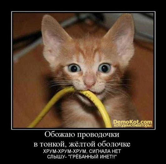 demotivatory_pro_kotje_087.jpg