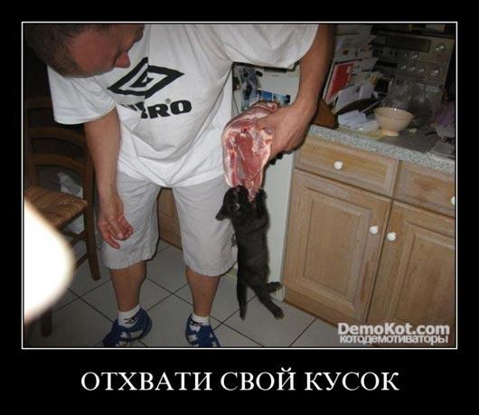 demotivatory_pro_kotje_088.jpg