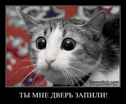 demotivatory_pro_kotje_093.jpg