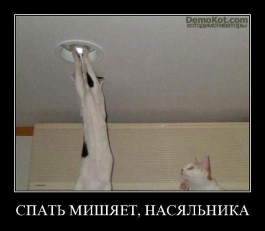 demotivatory_pro_kotje_095.jpg