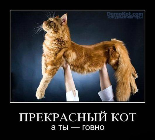 demotivatory_pro_kotje_098.jpg