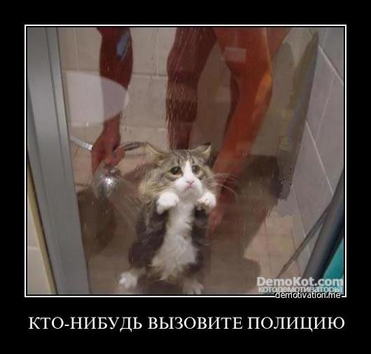 demotivatory_pro_kotje_103.jpg