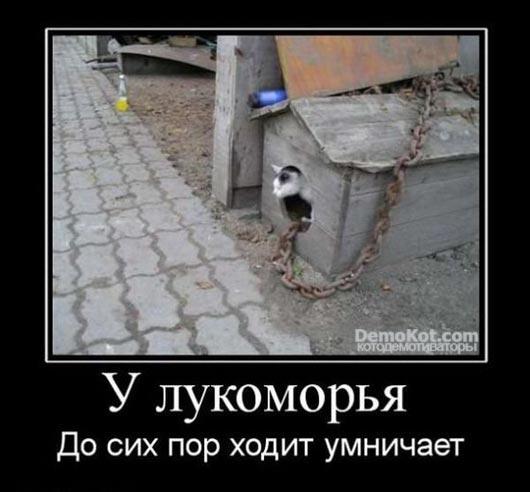 demotivatory_pro_kotje_113.jpg