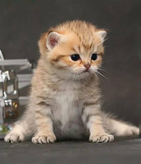 династии картинки с котиками милыми с надписью тяжелых шелков