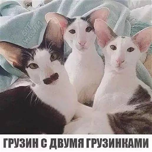 картинки грузин и его грузинки