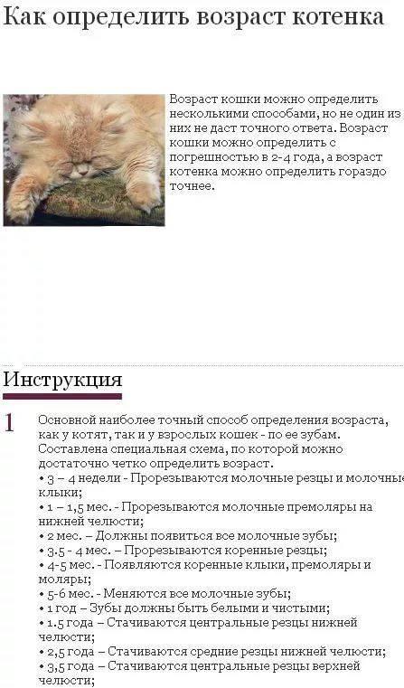 как определить возраст котенка по зубам фото приготовить пиво стало