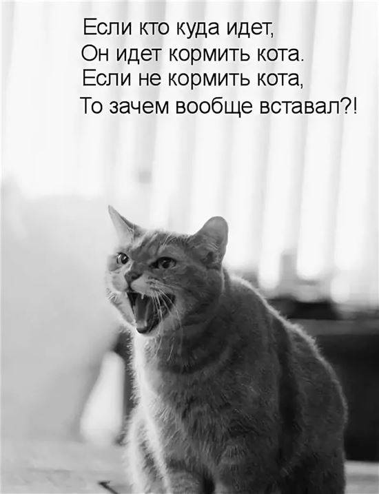 Картинка не верь коту его кормили центре