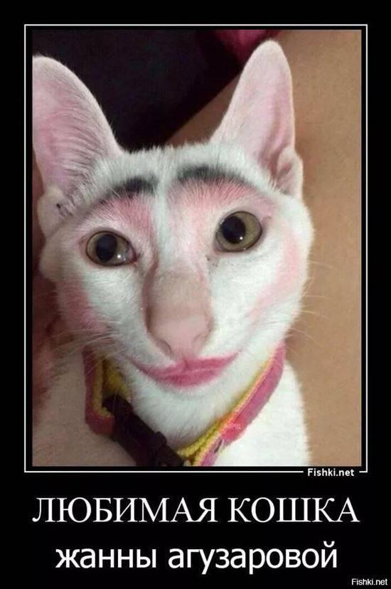 повреждения, кошку накрасили картинки было два