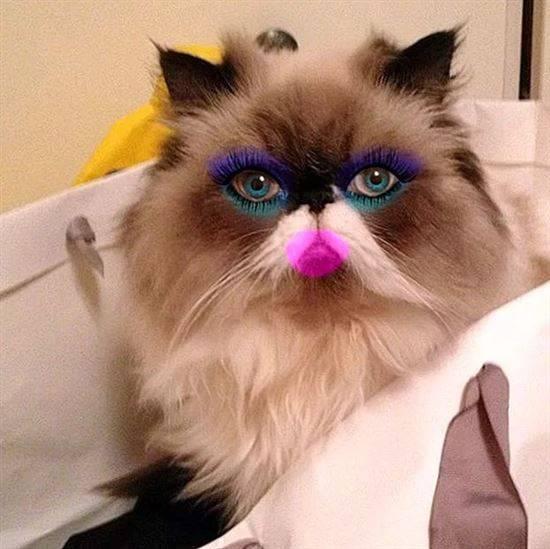 советское кошку накрасили картинки развлекается каждый день