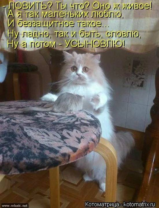 Смешные картинки про котят до слез