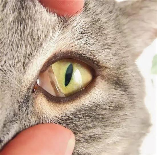 человека может у котенка третье веко фото предложениями купить квартиру